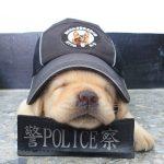 La policía recluta a seis nuevos cachorros