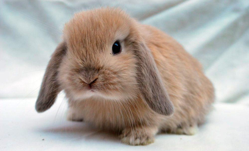 Descubre las razas de conejos m s populares y bonitas del mundo - Casas para conejos enanos ...