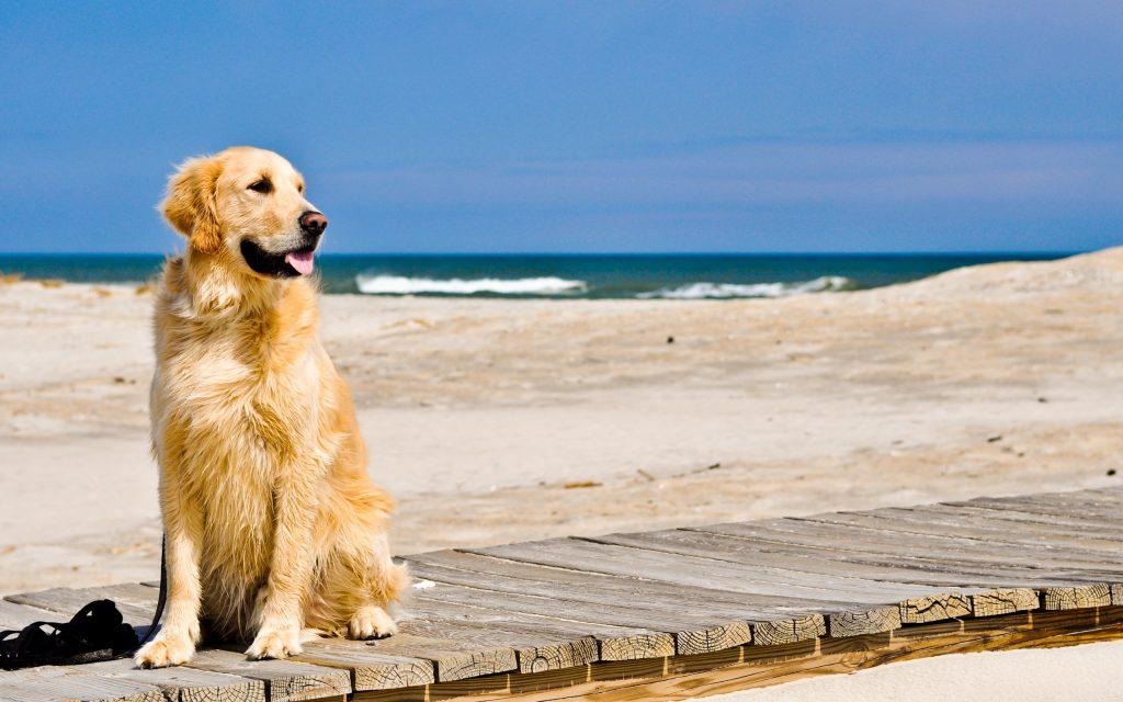 Llevar a mi perro a la playa