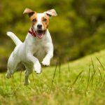 Los consejos clave para socializar a un perro adulto