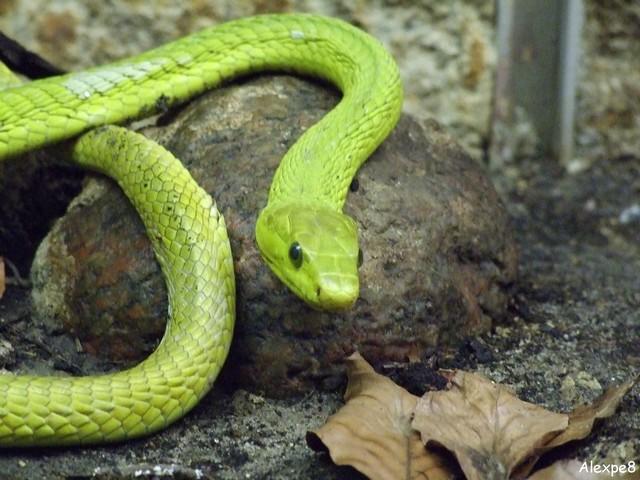 Más cosas que debes saber de tu serpiente