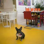Madrid Dog Friendly y Barcelona Dog Friendly
