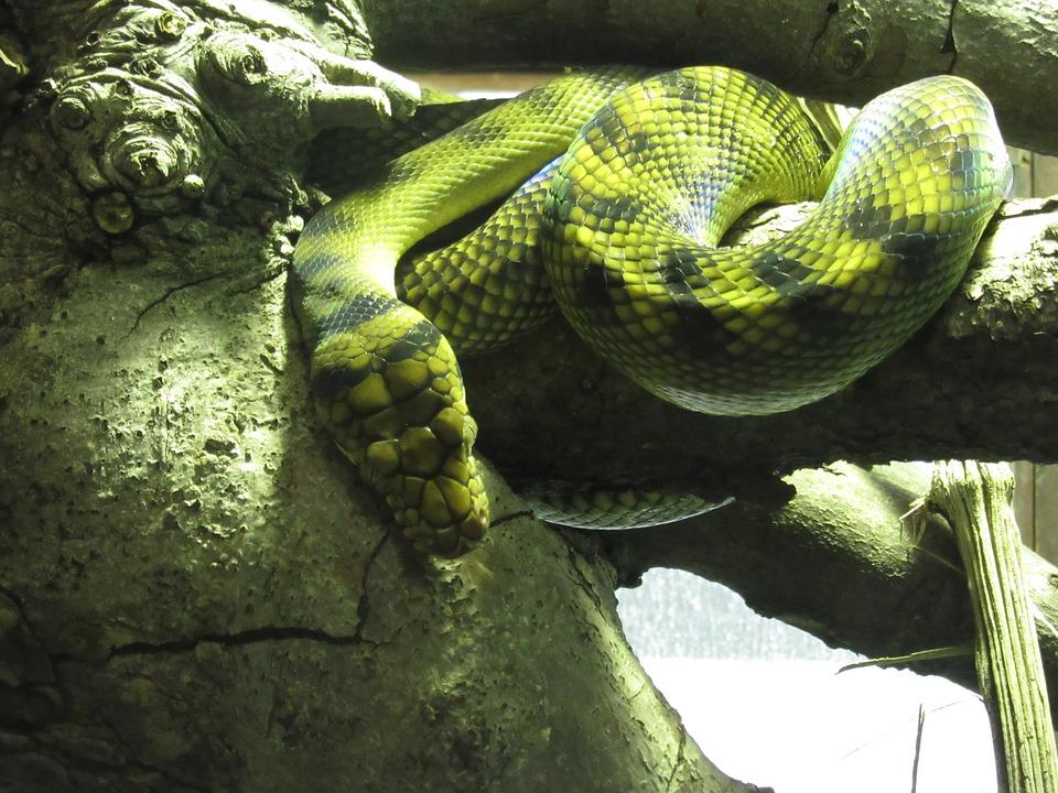 Mi serpiente ha dejado de comer por problemas de salud