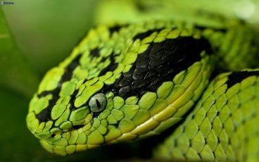 Mi serpiente no come