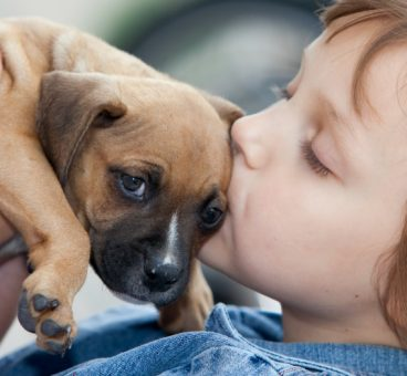 Motivos para adoptar un animal