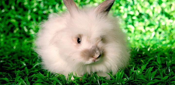 Por qué adoptar un conejo