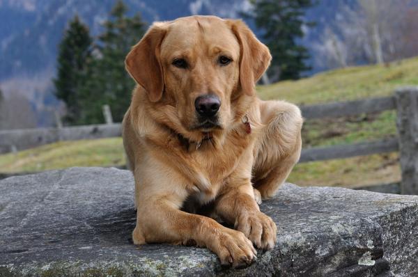 Por qué los perros convulsionan