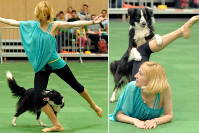 Practica el freestyle canino con tu perro