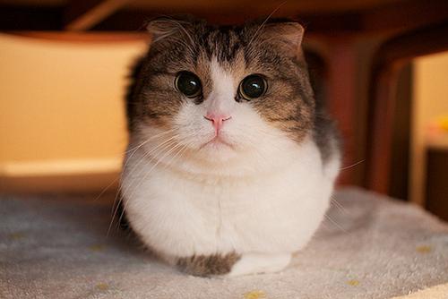 Primeros auxilios ante el envenenamiento en gatos