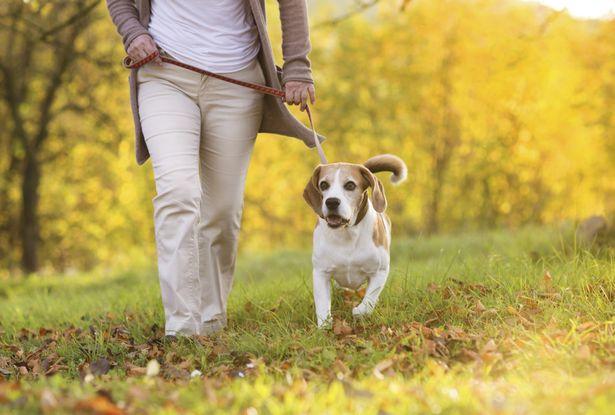 Primeros auxilios para el envenenamiento en perros