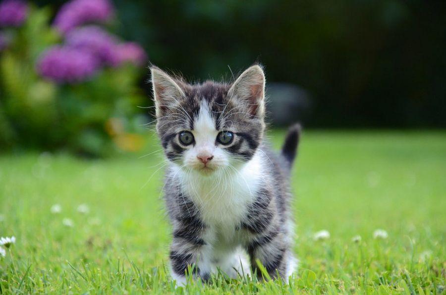 Primeros auxilios para las heridas en gatos