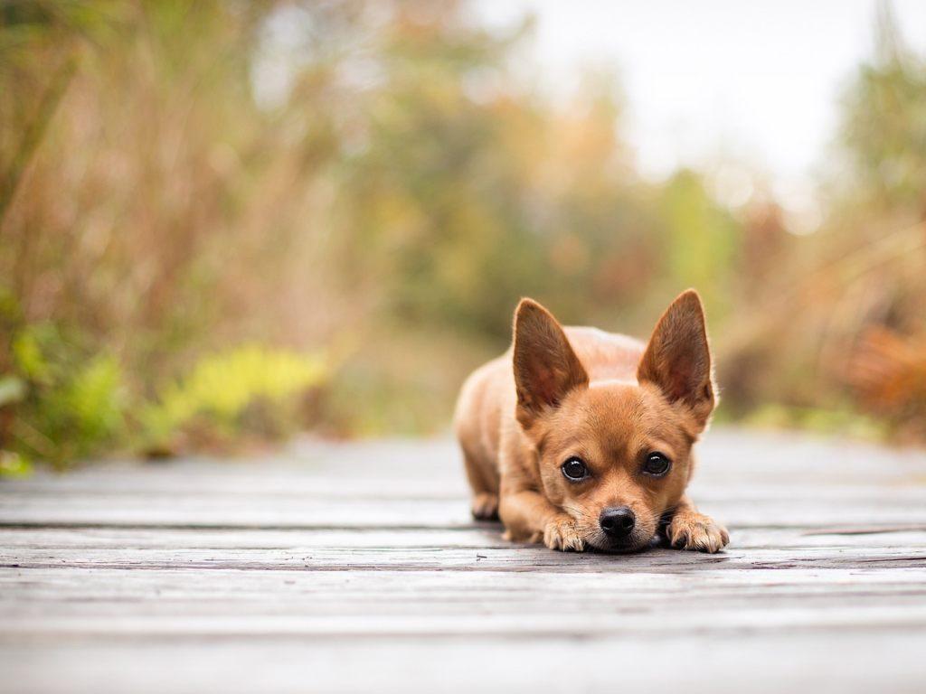Principales causas del envenenamiento en perros