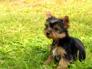 Problemas respiratorios en perros