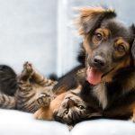 Qué debes considerar antes de adoptar un animal