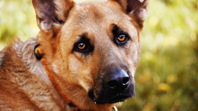 Qué es el entropión en perros y por qué ocurre