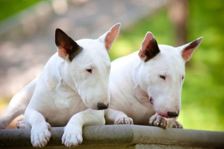 Qué es el síndrome de Cushing en perros