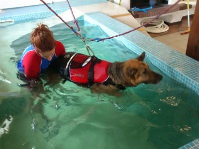 Qué es la hidroterapia para perros