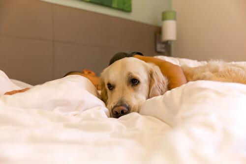 Qué es la hipotermia en perros