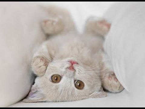 Qué hacer ante un golpe de calor en gatos