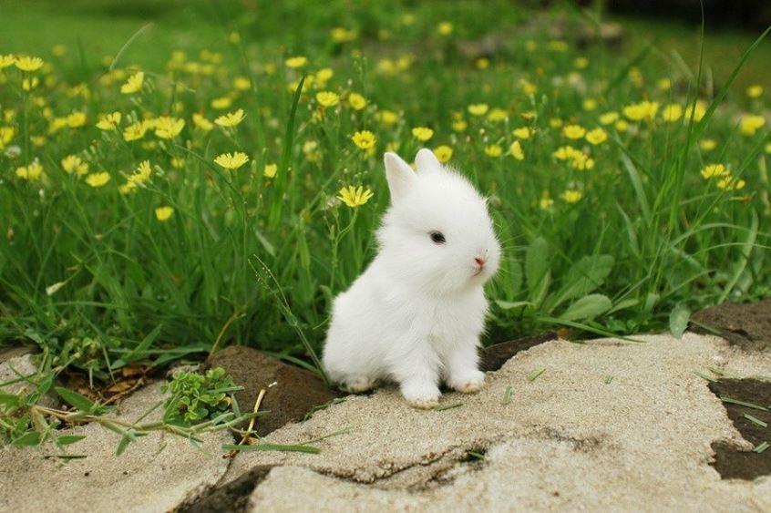 Qué necesita un conejo