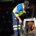 Qué ocurre con las mascotas de las personas hospitalizadas