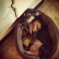 Qué significa la mirada triste y de culpabilidad de los perros