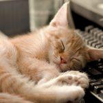Razones por las que mi gato duerme mucho