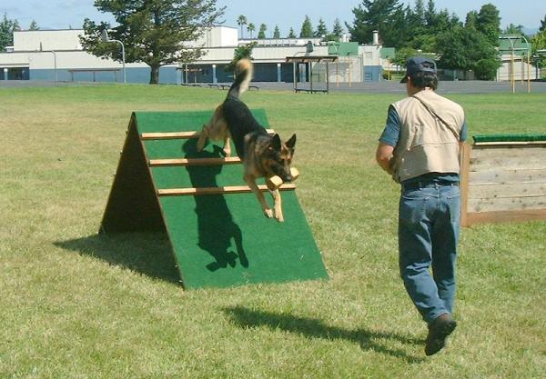 Recorridos y obstáculos en el agility canino