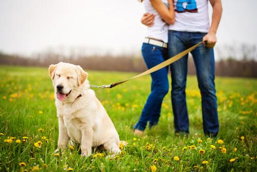 Síntomas de envenenamiento en perros