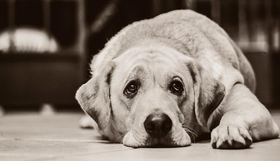 Síntomas de que tu perro ha comido jabón