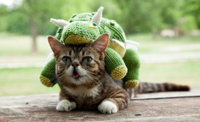 Síntomas del golpe de calor en gatos