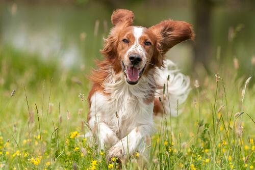 Socializar a un perro es un proceso único