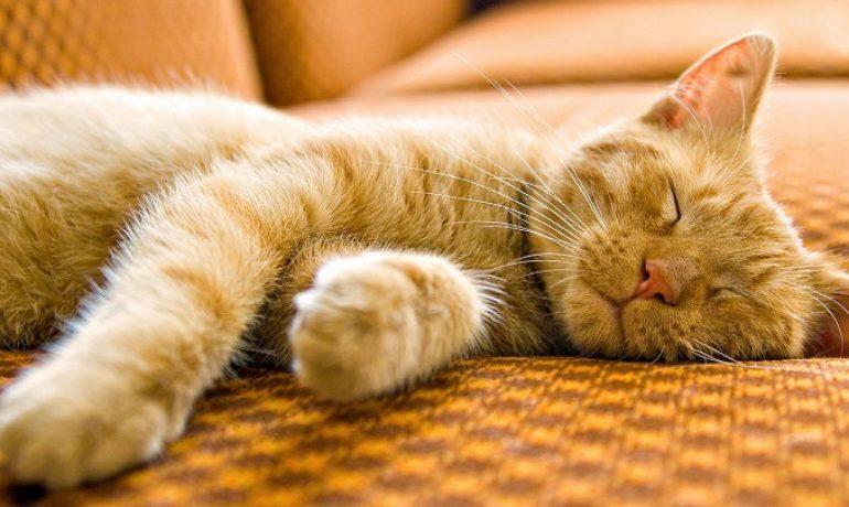 Te damos 5 razones para adoptar a un gato
