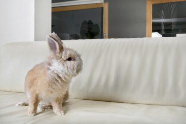 Te hablamos de las enfermedades más comunes de los conejos