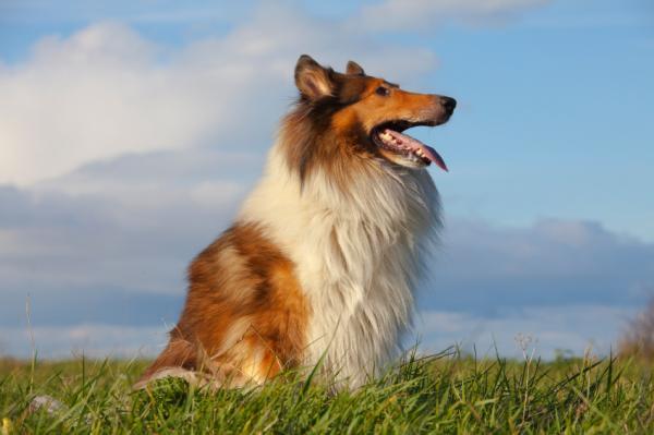 Te lo contamos TODO sobre las vitaminas para perros de alto rendimiento