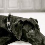 Te lo contamos todo sobre el adiestramiento canino tradicional