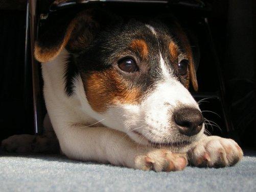 Te lo contamos todo sobre el nistagmo en perros
