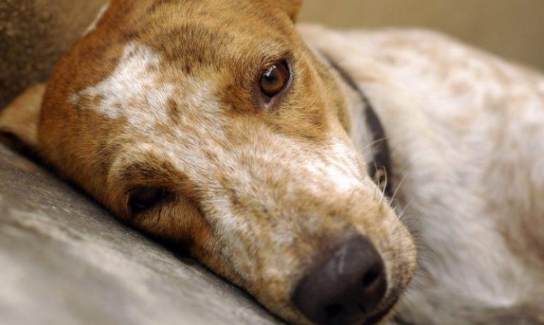 Te lo contamos todo sobre la gripe en los perros