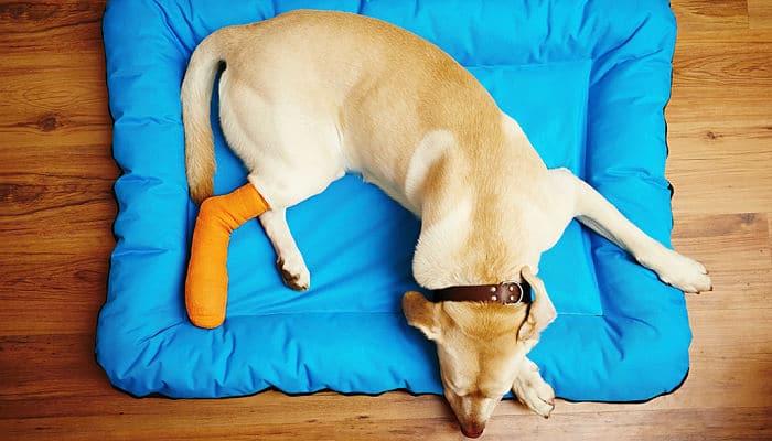 Tipos de fracturas en perros