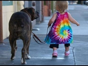 Todo sobre el envenenamiento en perros