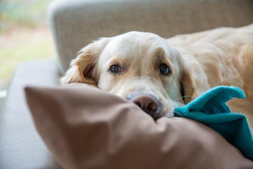 Tratamiento de la hipotermia en perros