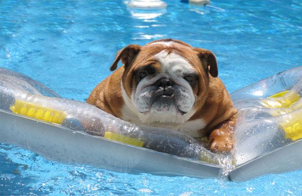 Tratamiento de la insolación en perros
