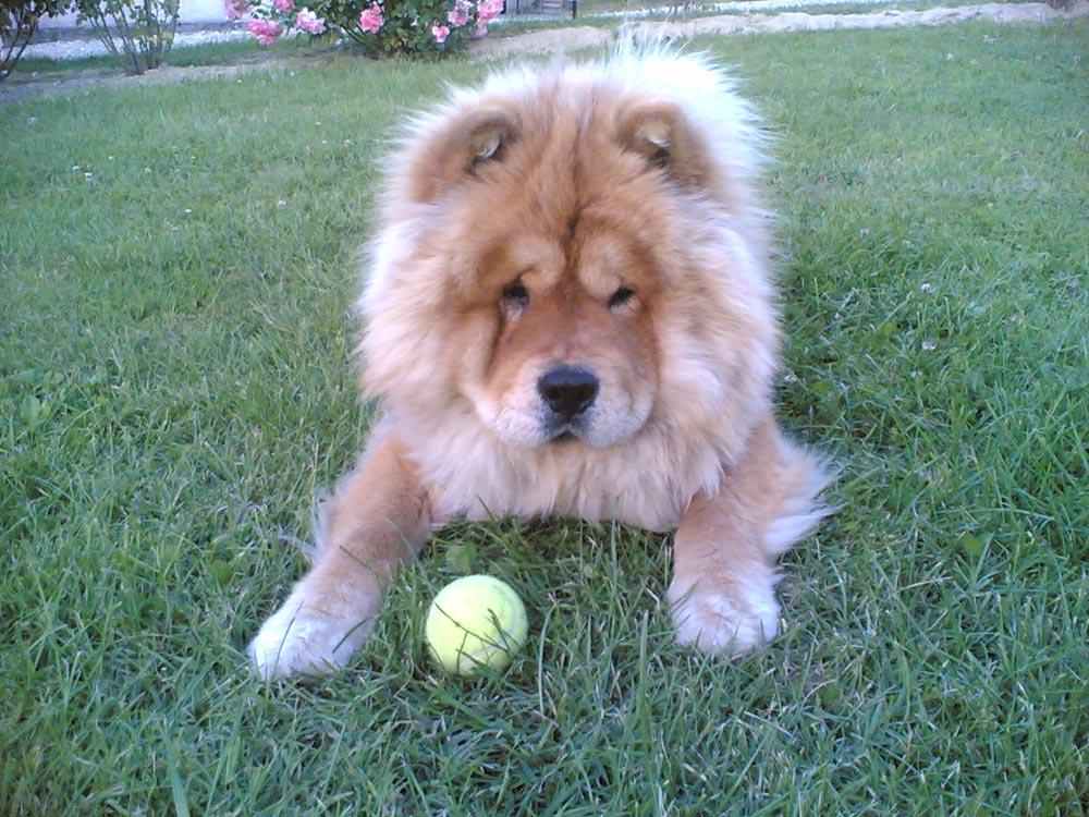 Tratamiento de la obesidad canina