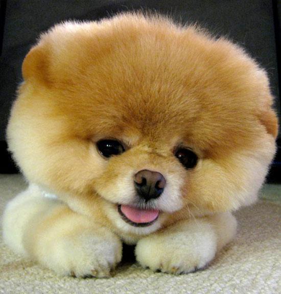 Tratamiento del síndrome de Cushing en perros