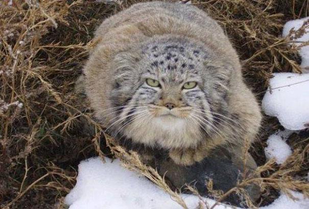 Un granjero encontró unos gatitos abandonados
