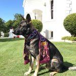 Un perro policía fue despedido por ser demasiado cariñoso