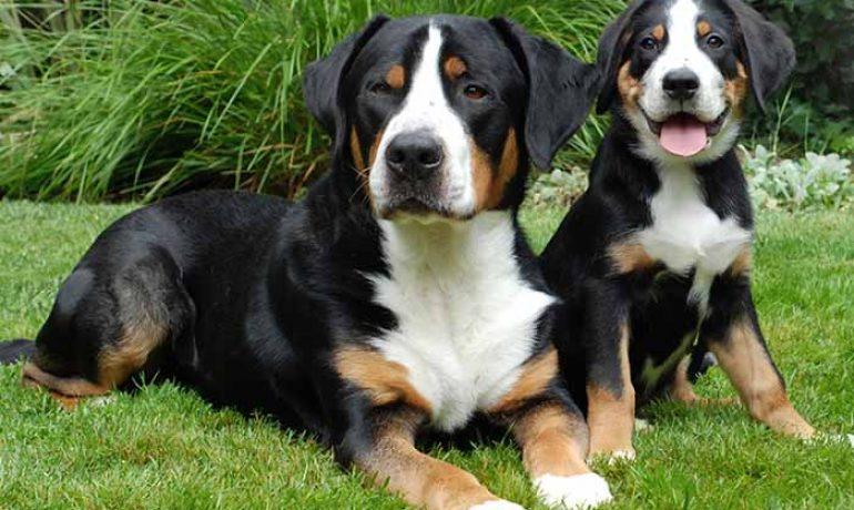 Ventajas de esterilizar a un perro