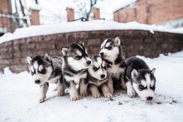 autorizacion mas de cinco mascotas