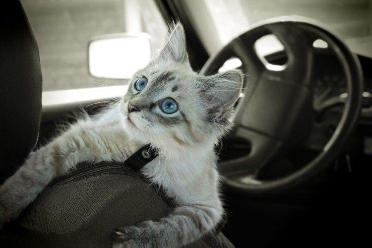 consejos para viajar con tu gato
