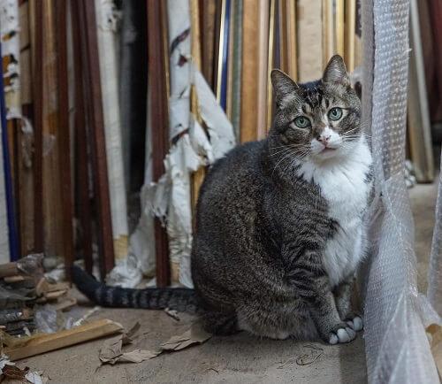 hong Kong la ciudad que adora a los gatos